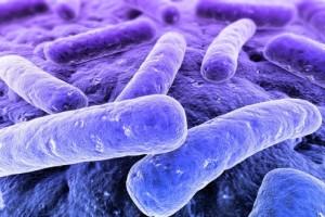Schon Steinzeit-Bakterien waren resistent gegen Antibiotika