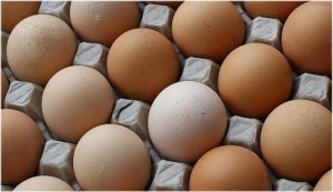 Paul-Ehrlich-Institut will mit Bakteriengeißeln gegen Lebensmittelallergien vorgehen