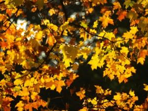 Jeder Fünfte leidet unter Herbst-Winter-Blues