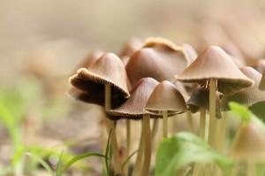 Dauerhafte Persönlichkeitsveränderung durch halluzinogene Pilze