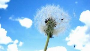 Pollenallergie: Unbehandelter Heuschnupfen erhöht Asthma-Risiko.