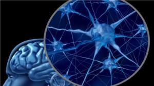 Pubertät kostet Milliarden von Gehirnzellen