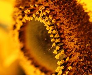 Experten rechnen 2012 mit starkem Pollenflug