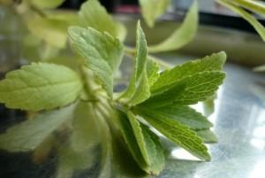 Stevia soll beim Abnehmen helfen