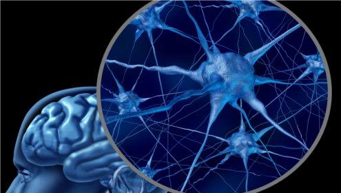 UKE-Forscher deckt möglichen Grund für Häufung von Demenzen im Alter auf
